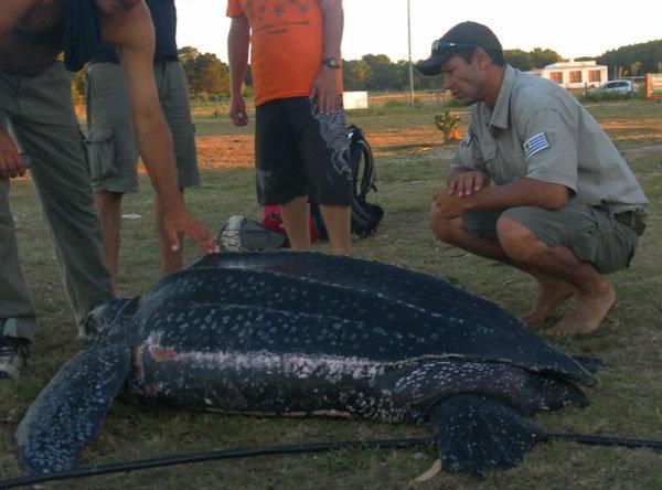 Tortuga gigante en Cabo Polonio