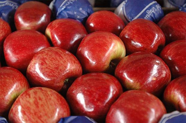 Mandan fruta