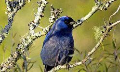 Contenido de la imagen Fauna y Flora de los Bosques de Uruguay