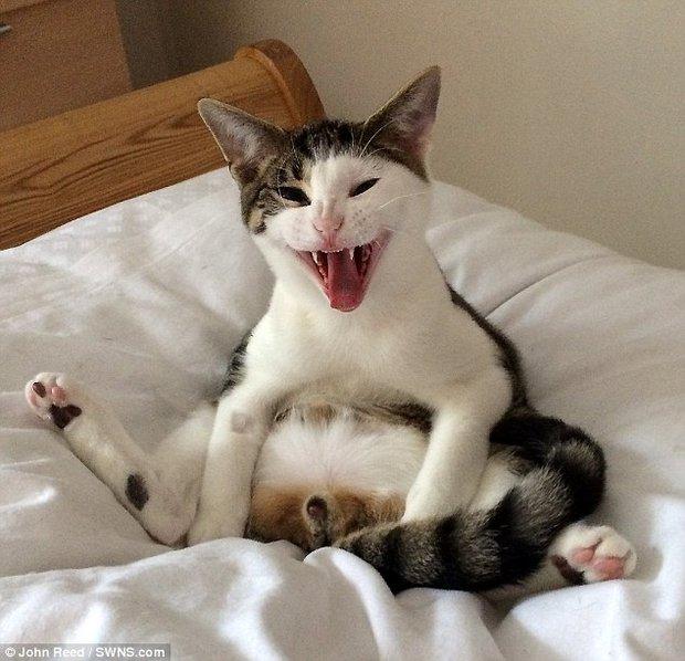 Reacción de un gato al descubrir su castración