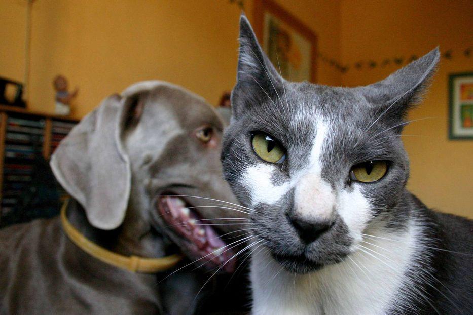 ¿Cuántos perros y gatos hay en Uruguay?