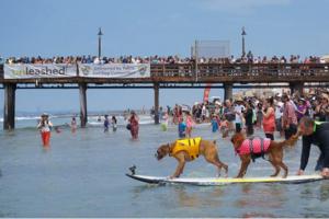 Increíble competencia para perros surfistas en San Diego, Estados Unidos