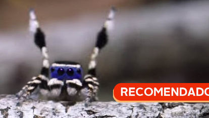 RECOMENDADO: La araña danzarina