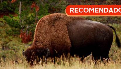 RECOMENDADO: Visita a Yellowstone