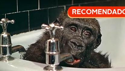 RECOMENDADO: Gorilas en la bañera