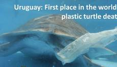 Uruguay, el país que registra más muertes de tortugas por plástico