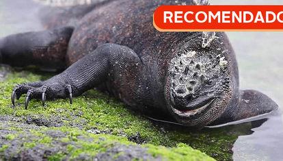 RECOMENDADO: Islas Galápagos