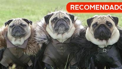 RECOMENDADO: Pugs de Tronos