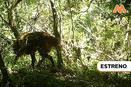 MAÑANA ES TARDE: Un zorro en zancos