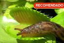 RECOMENDADO: Planta Carnívora vs. Babosa