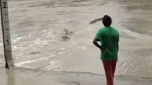 Se defiende de cocodrilo ¡con una chancla!