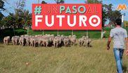 #UnPasoAlFuturo - Un liceo de 14 hectáreas
