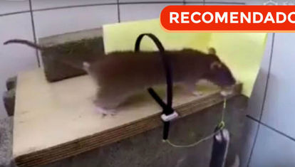 Trampas caseras para ratones