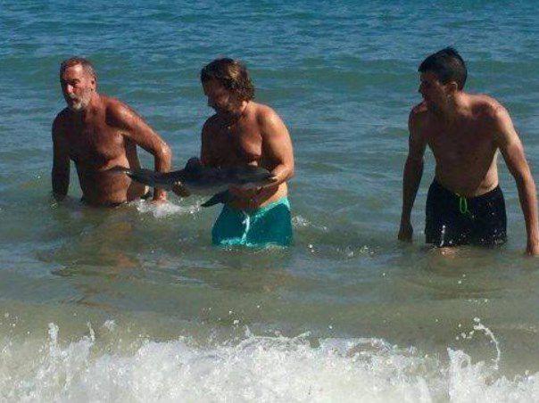 Muere una cría lactante de delfín hostigada por bañistas — España