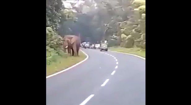 Quería selfie con un elefante y murió aplastado — Fuertes imágenes