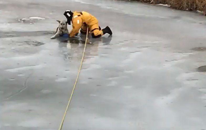 Rescatan a perro de arroyo congelado