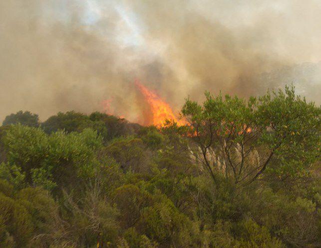 Bomberos trabaja para combatir incendio en el Cerro del Verdún
