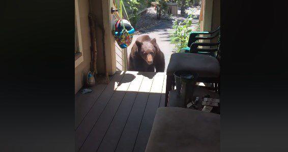 Mujer convence a un oso con su voz de mamá