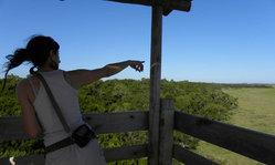 Contenido de la imagen El Bosque de Ombúes de Rocha