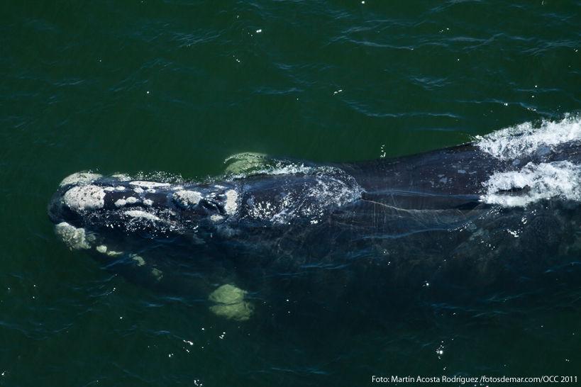 Volvió el juego de la ballena