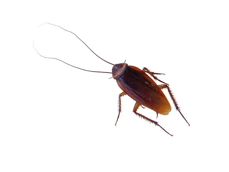 Zoológico ofrece poner el nombre de su ex a una cucaracha en San Valentín