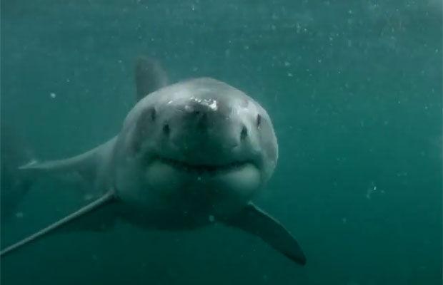 Un hombre murió tras ser brutalmente mutilado por un tiburón en Australia