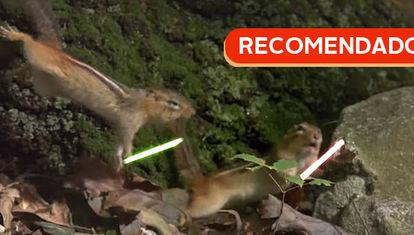 RECOMENDADO: Las ardillas Jedi