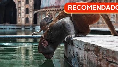 RECOMENDADO: India, tierra de reyes