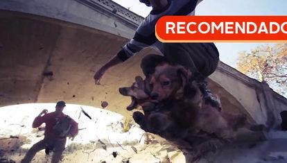 RECOMENDADO: Dogboarding