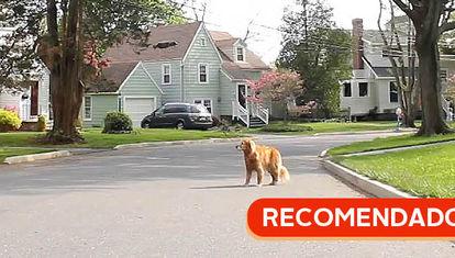 RECOMENDADO: Perros y drones