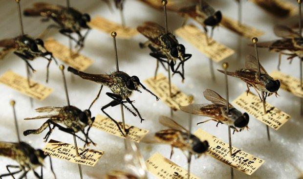 OMS dice que El Salvador es pionero centroamericano en eliminación de malaria