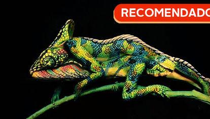 RECOMENDADO: El camaleón, mamá