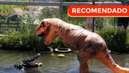 Duelo: Cocodrilo vs. Tiranosaurio