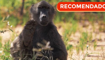 Viajes: Namibia salvaje