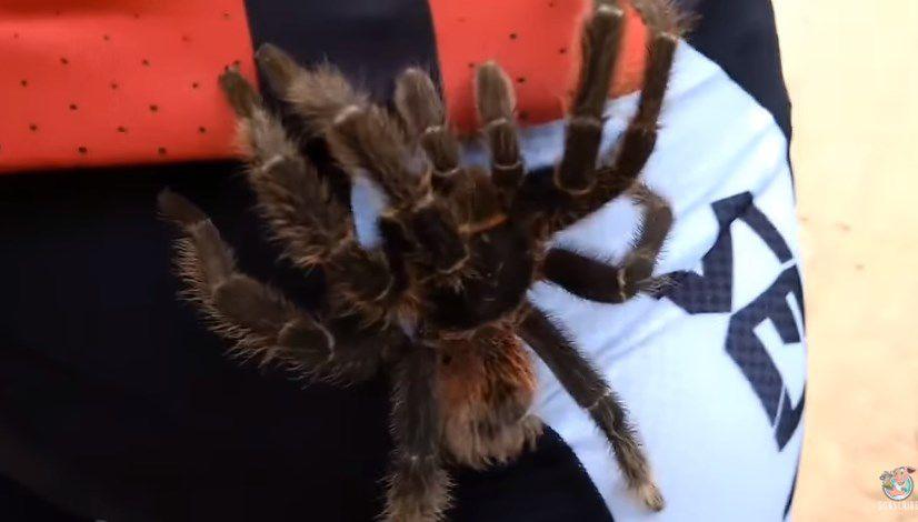 Ciclista sorprendido cuando una enorme y veloz araña decide pasearse ...