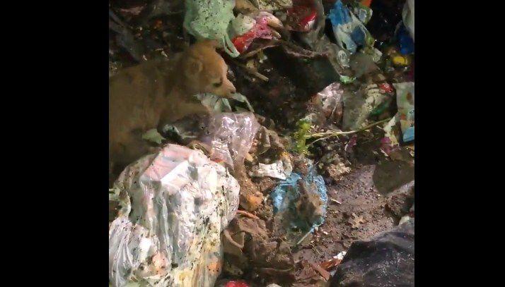 Recolectores salvaron a un perrito que habían tirado en la basura