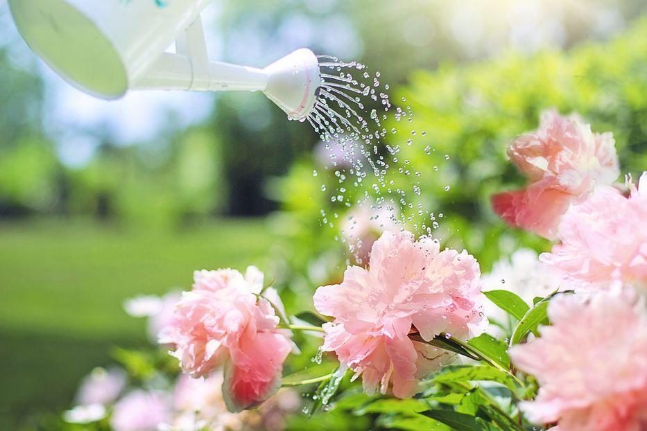 La sed sin agua
