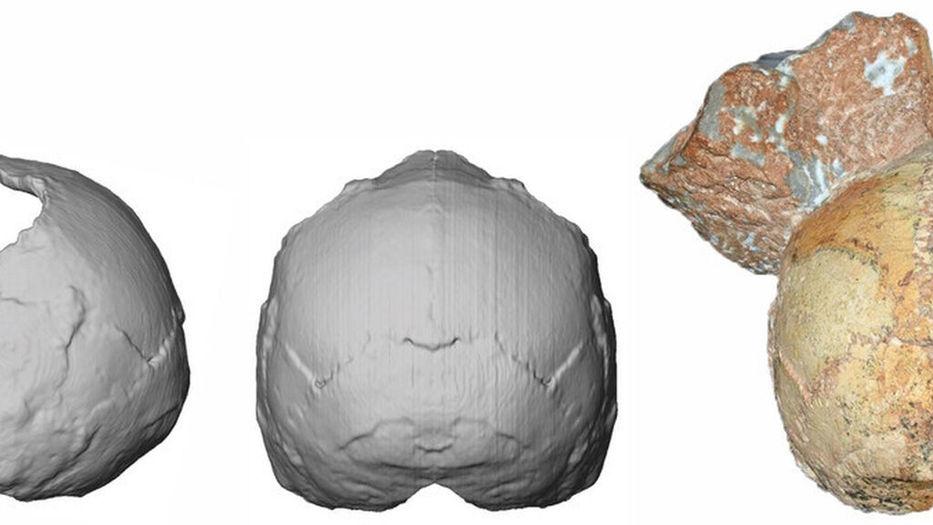 Cráneo de homo sapiens es hallado fuera de África