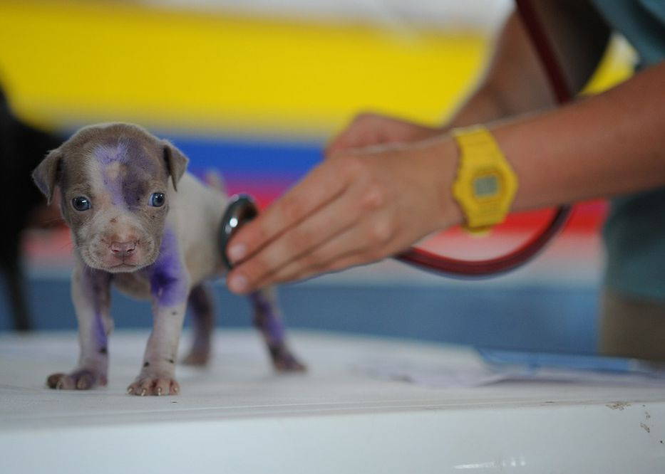 Vida de perros. Por Andrés Peirano