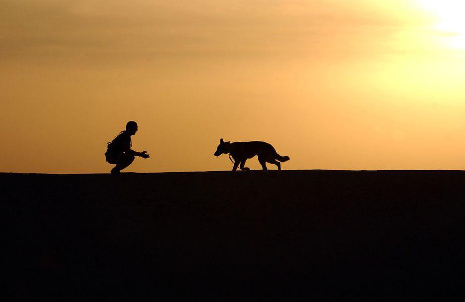 Vida de perros: por Andrés Peirano