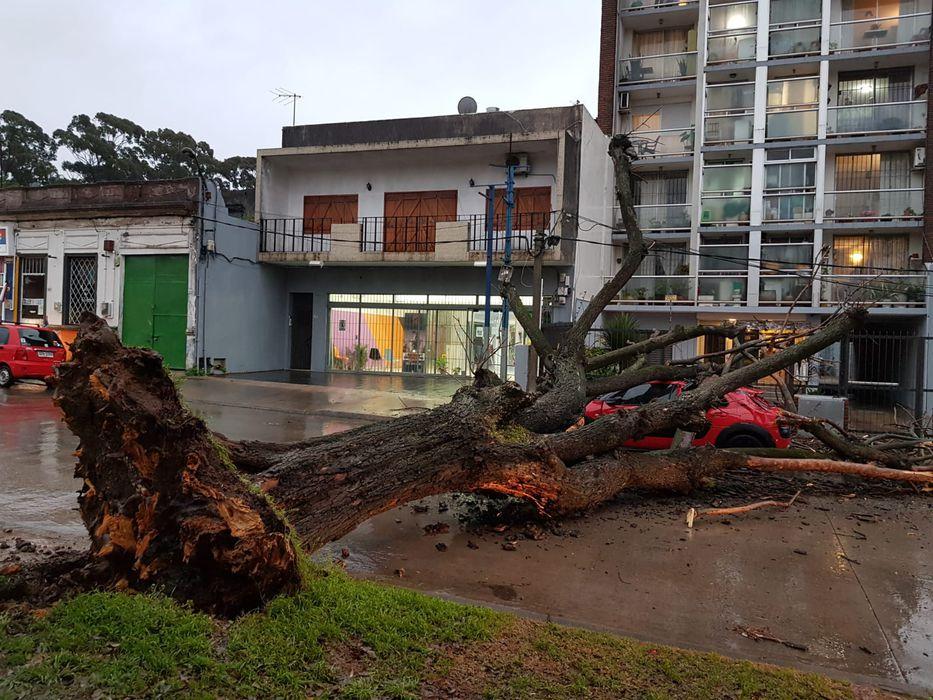 No hagan leña del árbol caído