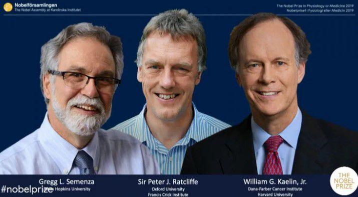 Nobel de Medicina a la investigación de células - Ciencias