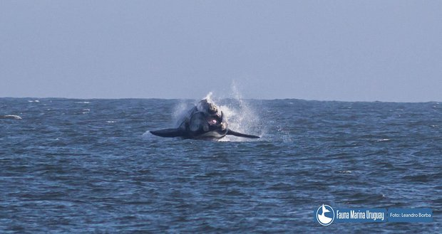 Foto: Facebook Fauna Marina Uruguay