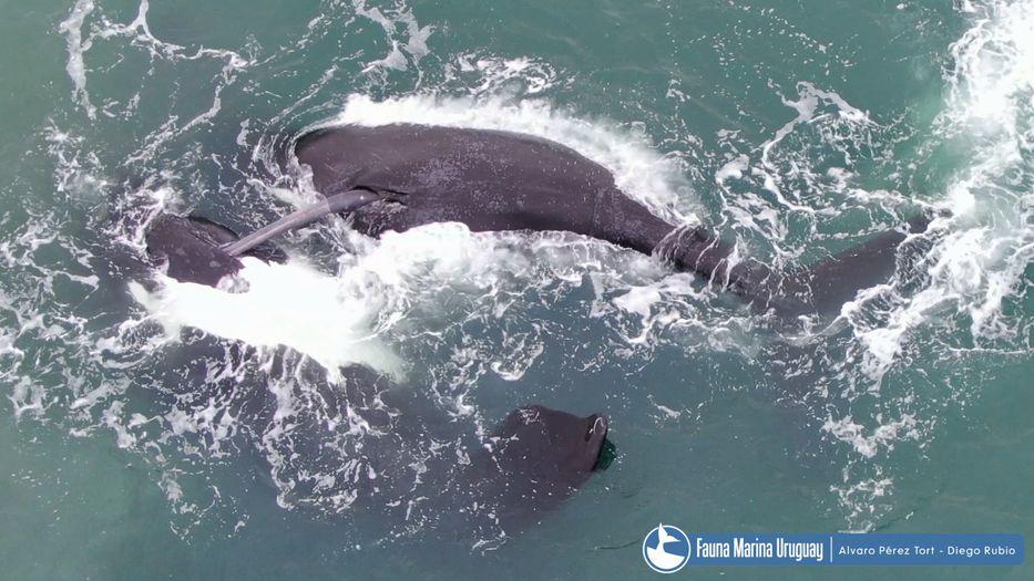 No apto para ballenas menores