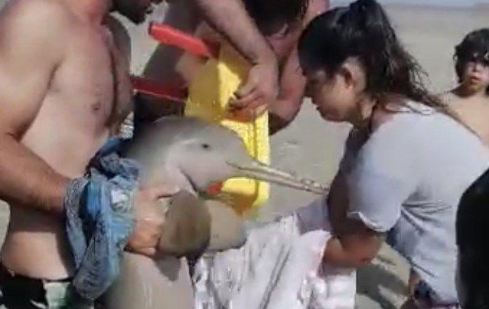 Delfín hasta el fin